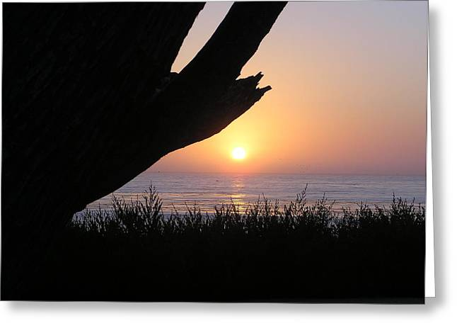 Pacific Cypress Sunset Greeting Card by Richard Mansfield