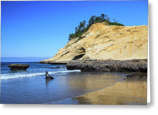 Greeting Card featuring the photograph Pacific Morning by David Chandler