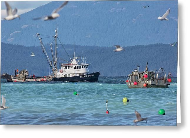 Pacific Ocean Herring Greeting Card by Randy Hall