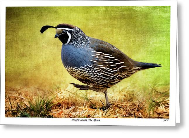 Pacific Quail The Sprint Greeting Card by John Williams