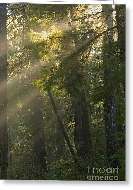 Pacific Rim Misty Sunbeams Greeting Card by Adam Jewell