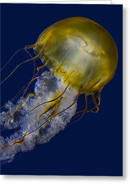 Pacific Sea Nettle Jellyfish Greeting Card