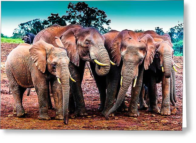 Pack-o-pachyderms Greeting Card