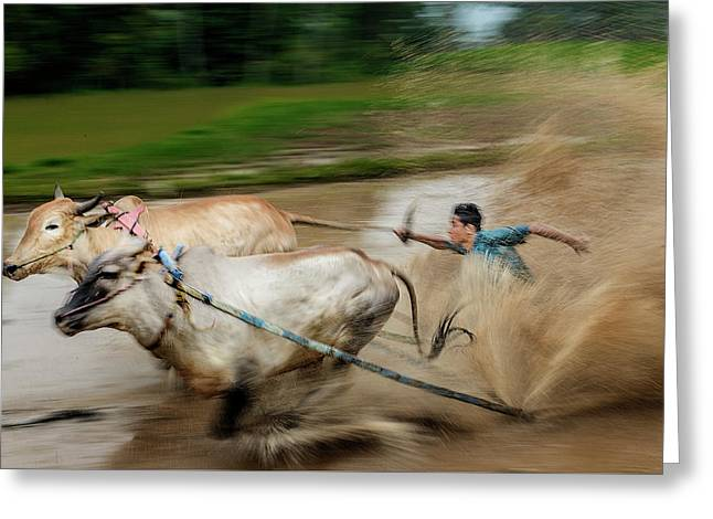Pacu Jawi Bull Race Festival Greeting Card