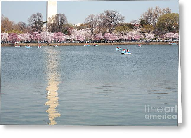 Paddleboating At Cherry Blossom Time In Washington Dc Greeting Card