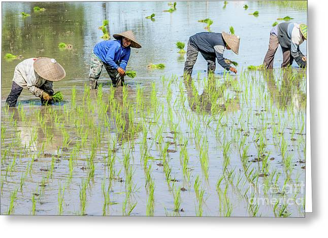 Paddy Field 1 Greeting Card by Werner Padarin