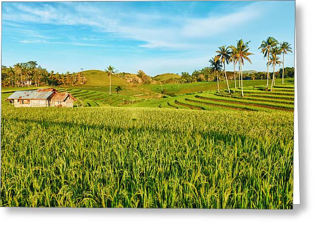 Paddy Rice  Greeting Card by MotHaiBaPhoto Prints