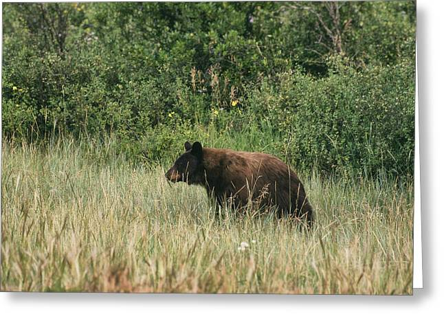 Pagosa Momma Bear Greeting Card
