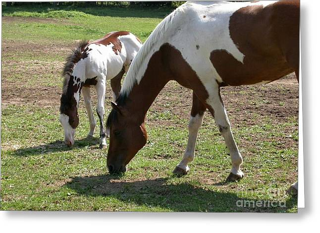 Paint Horse And Foal Greeting Card by Sandra  Huston