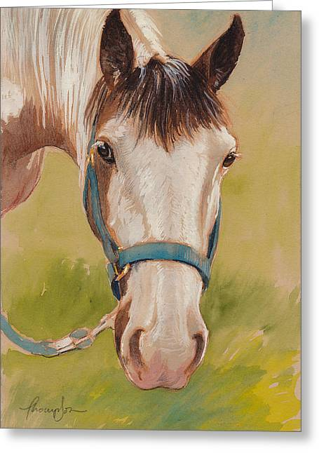 Paint Horse Pause Greeting Card by Tracie Thompson