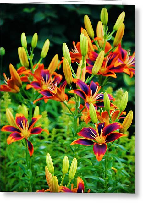 Paintbox Lillies Greeting Card by Carol Toepke