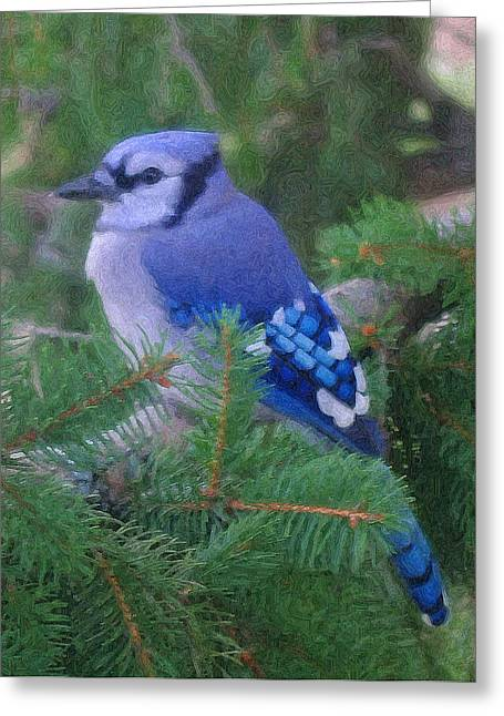 Painted Blue Jay  Greeting Card by Thomas  MacPherson Jr