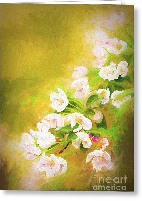 Painted Crabapple Blossoms In The Golden Evening Light Greeting Card
