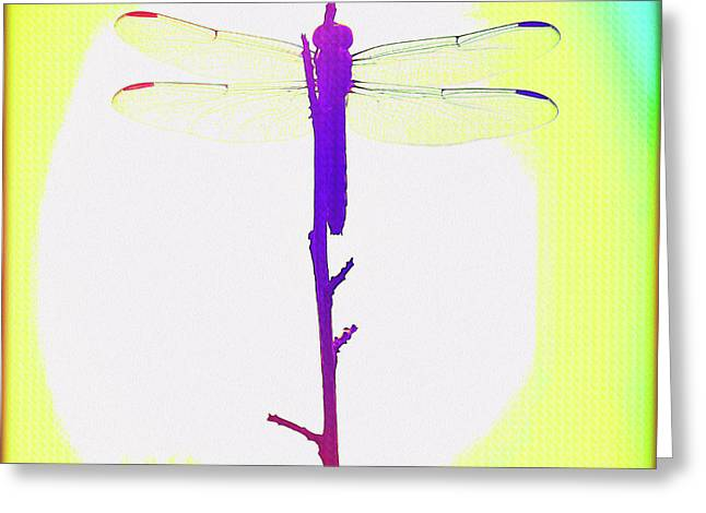 Painted Dragonfly IIi Greeting Card by Chris Andruskiewicz