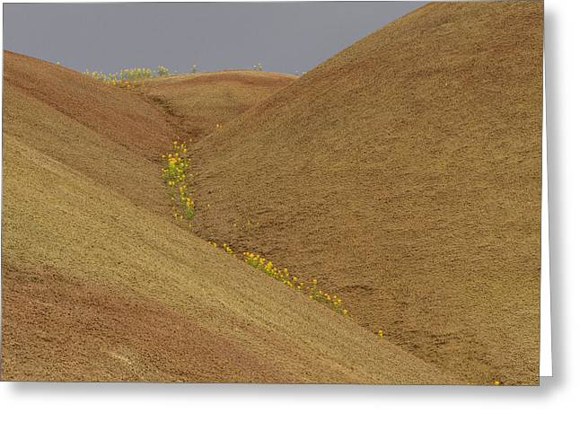 Painted Hills Balsam Greeting Card by Jean Noren