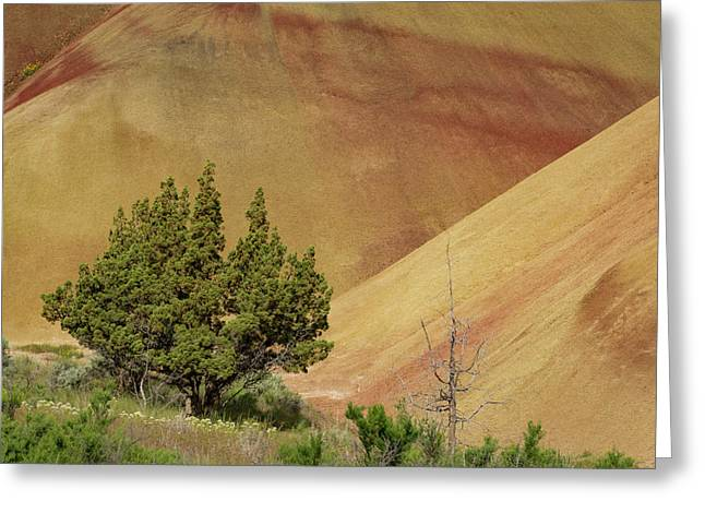 Painted Hills Trees Greeting Card by Jean Noren