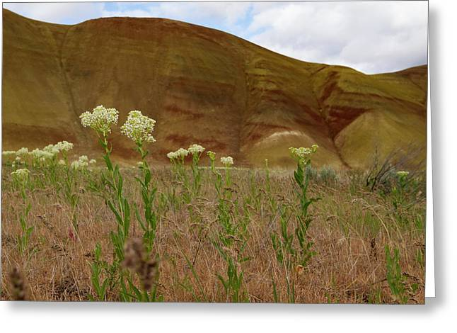 Painted Hills White Wildflowers Greeting Card by Jean Noren