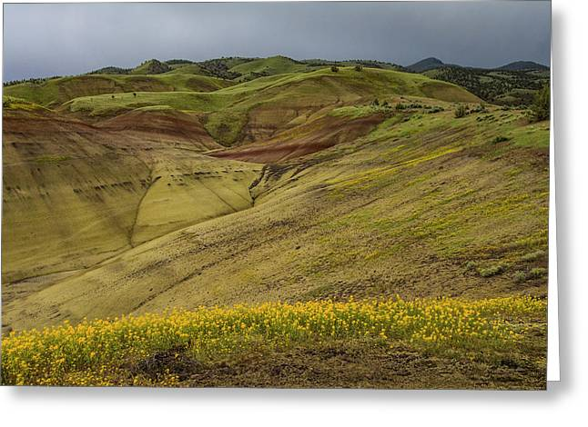 Painted Hills Wildflowers Greeting Card by Jean Noren