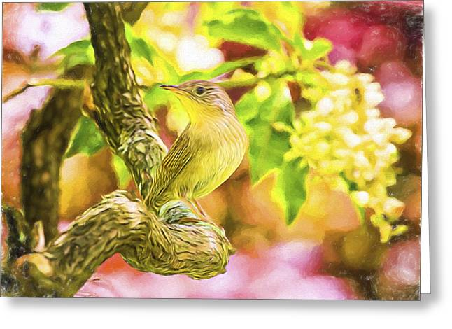 Painted House Wren Greeting Card by Daphne Sampson