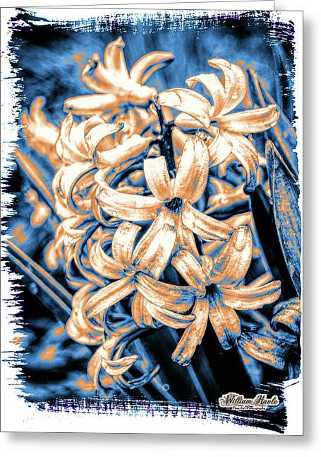 Greeting Card featuring the digital art Painted Hyacinth by William Havle