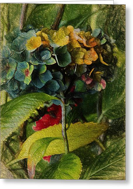 Painted Hydrangeas  Greeting Card by Bonnie Bruno