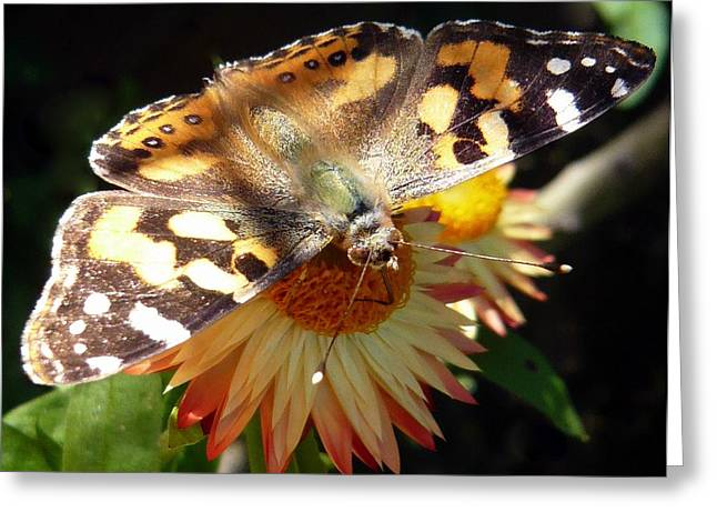 Painted Lady - Pit Stop 1 Greeting Card by Esther Brueggemeier