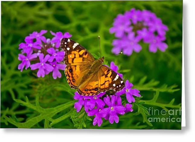 Painted Lady On Purple Verbena Greeting Card