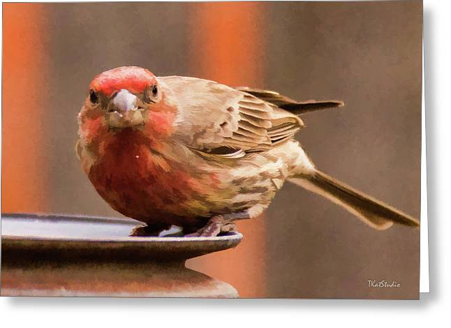 Painted Male Finch Greeting Card