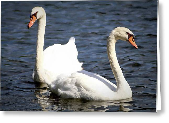 Painted Mute Swans Of Lake Junaluska North Carolina II Greeting Card