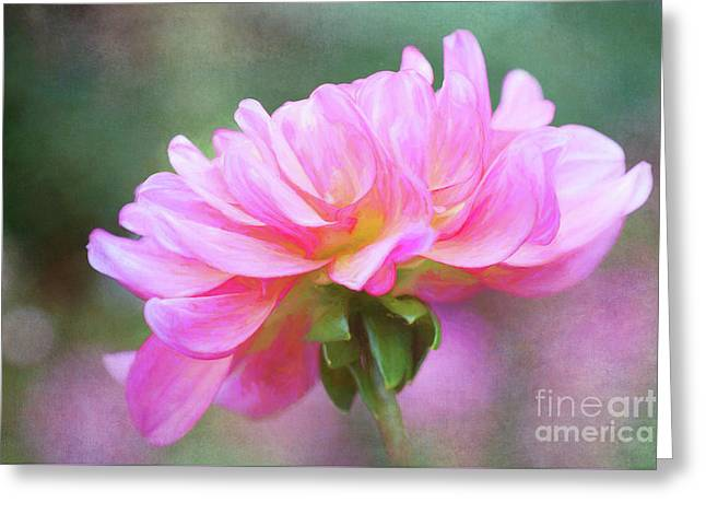 Painted Pink Dahlia Greeting Card