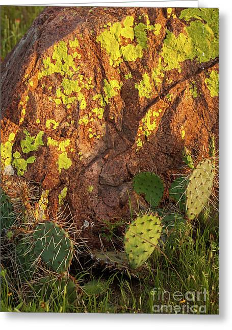 Painted Rock Greeting Card by Iris Greenwell