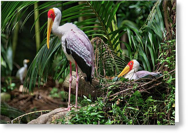 Yellow Beak Greeting Cards - Painted Stork With Young Greeting Card by Paul W Sharpe Aka Wizard of Wonders