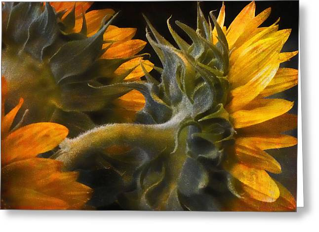 Painted Sun Flowers Greeting Card by John Rivera