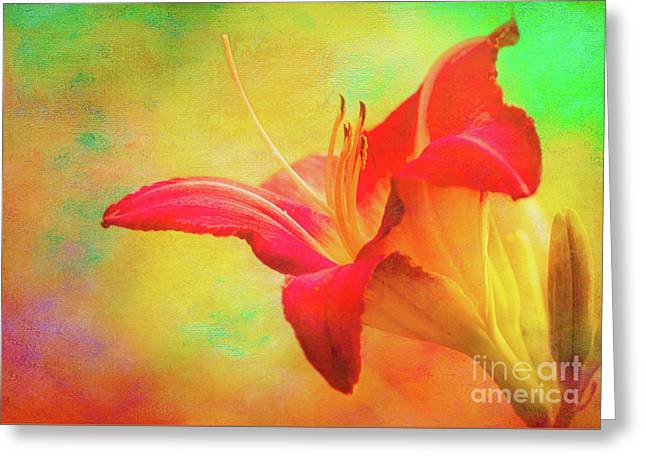 Painted Tammas Daylily Greeting Card