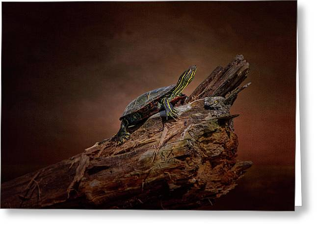 Painted Turtle Greeting Card