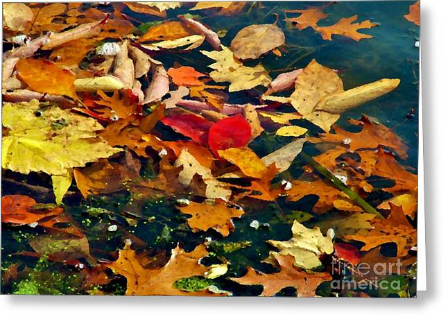 Painted Water          Autumn            Indiana Greeting Card