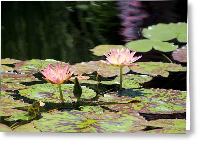 Painted Waters - Lilypond Greeting Card