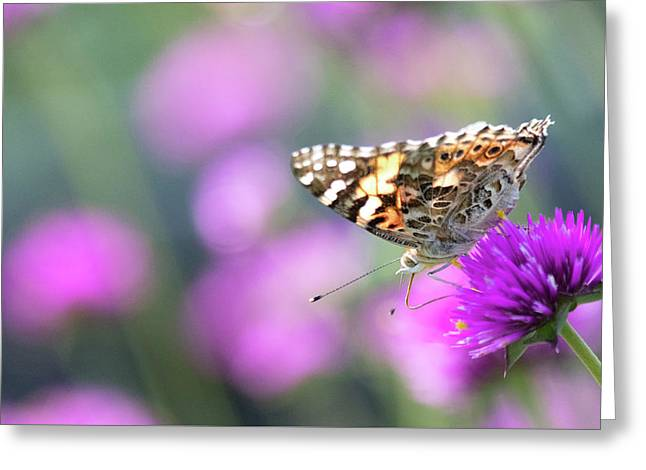 Greeting Card featuring the photograph Painterly Painted Lady 2 by Brian Hale