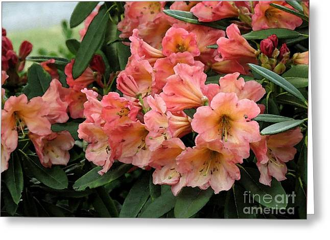 Painterly Rhododendron Grouping Greeting Card by Chris Anderson