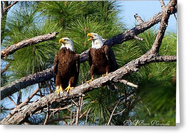 Greeting Card featuring the photograph Pair Of American Bald Eagle by Barbara Bowen