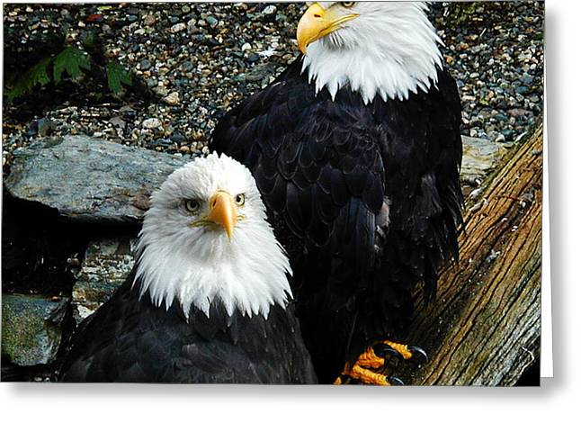 Greeting Card featuring the photograph Pair Of American Eagles by Claudia Abbott