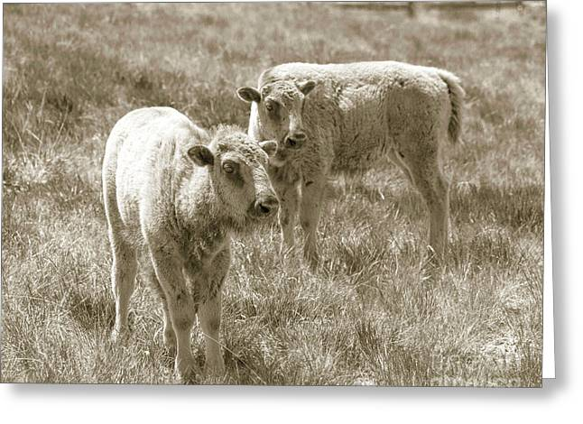 Greeting Card featuring the photograph Pair Of Baby Buffalos by Rebecca Margraf