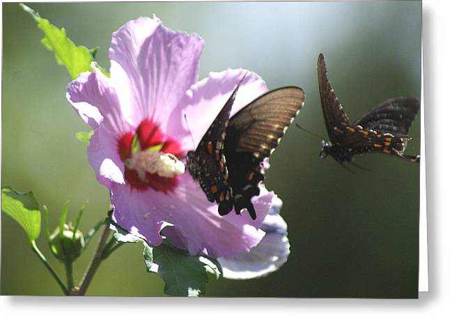 Greeting Card featuring the photograph Pair Of Butterflies by Rick Friedle