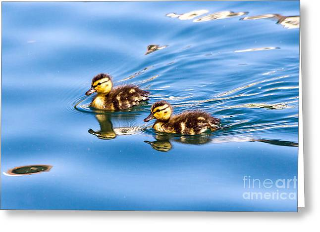 Duckling Duo Greeting Card