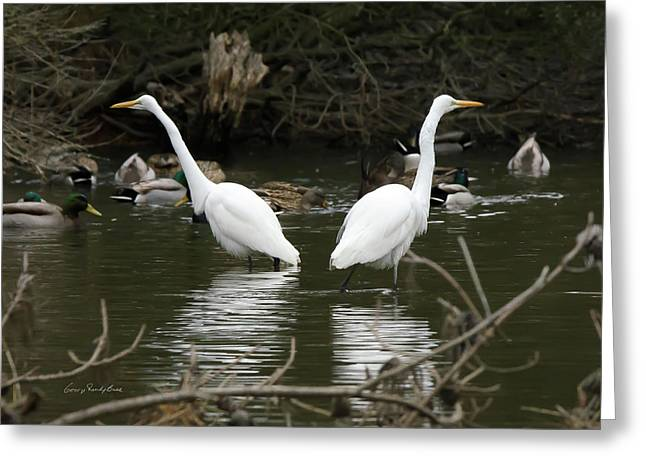 Pair Of Egrets Greeting Card by George Randy Bass