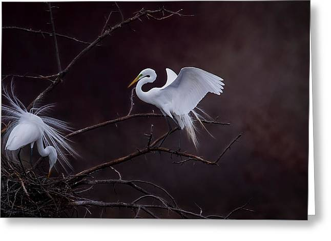 Pair Of Egrets Greeting Card