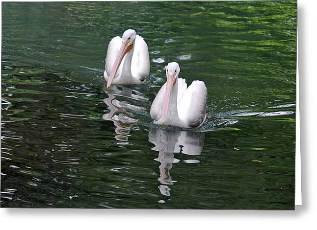 Pair Of Pelicans Greeting Card by Teresa Blanton