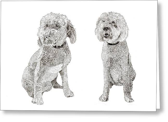 Pair Of Pretty Poodles Pups Greeting Card by Jack Pumphrey