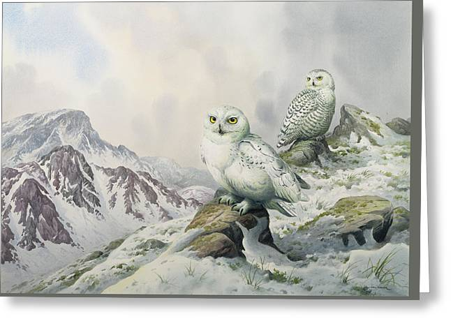 Pair Of Snowy Owls In The Snowy Mountains, Australia Greeting Card by Carl Donner
