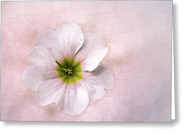 Pale Primrose Greeting Card